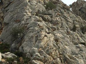 Berggeiten